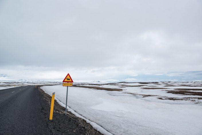 islande panneau renne
