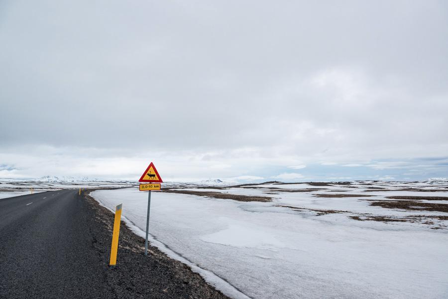 islande panneau signalisation renne