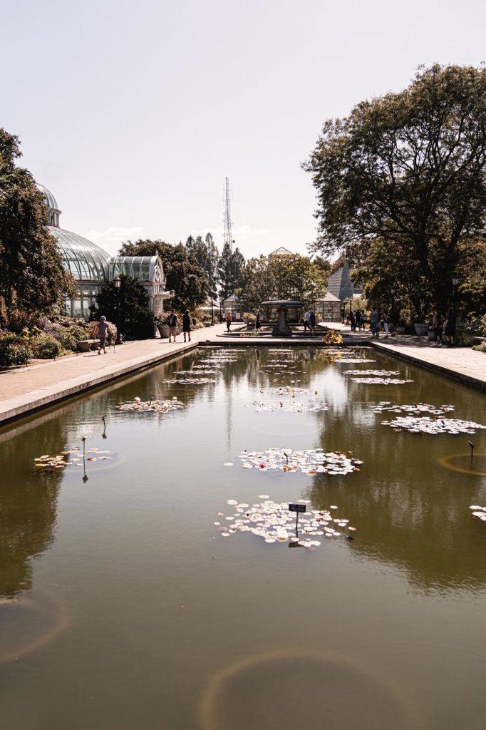 Jardin Botanique de Brooklyn - Bassins aux Nénuphars