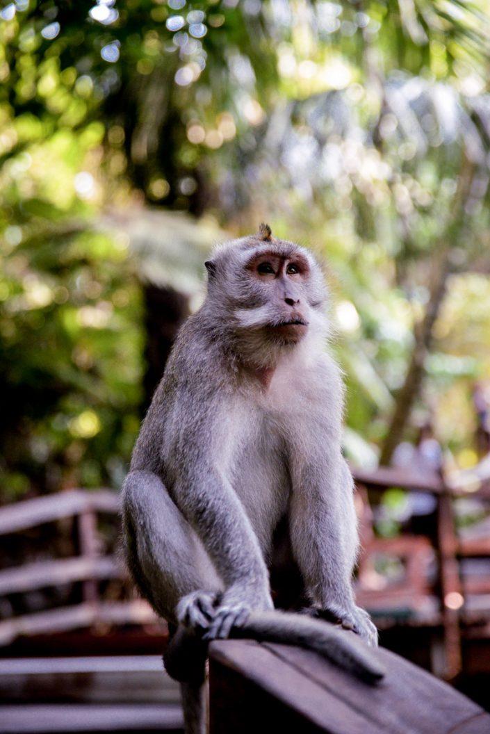 Road Trip Bali Voyage